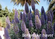 foredrag_botaniske