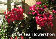 foredrag_flowershow