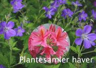 Plantesamler
